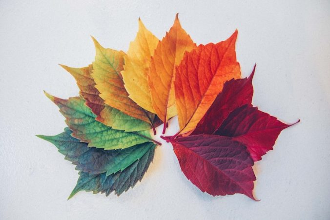 colorful display of leaves