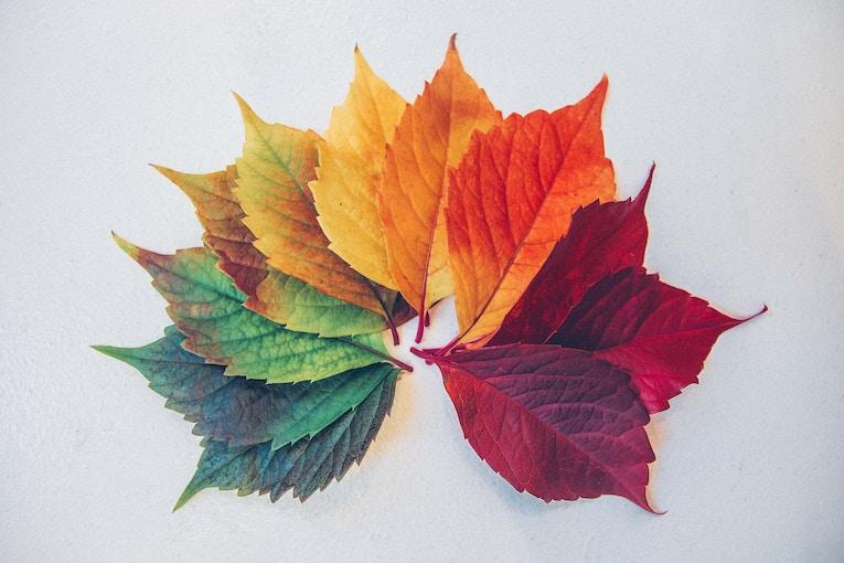 colorful display of leaves