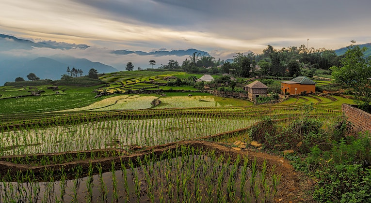 View of rice terraces in Vietnam