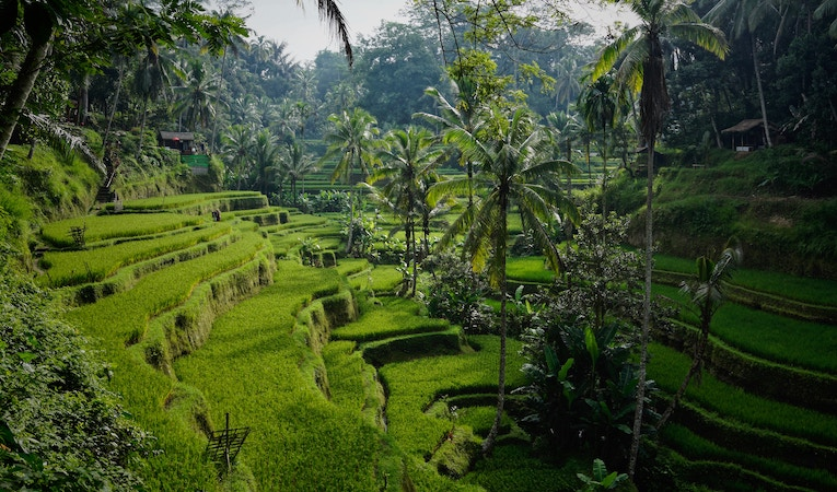 rice terraces in indonesia