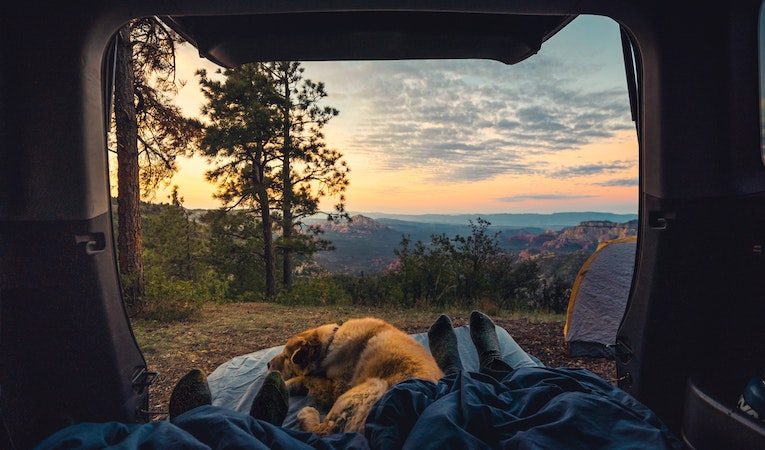 hiker in a tent with a dog