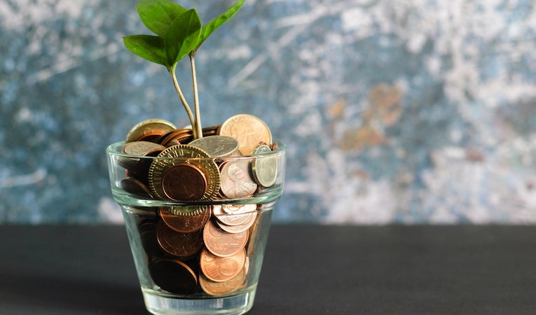 plant growing out of a pot of coins