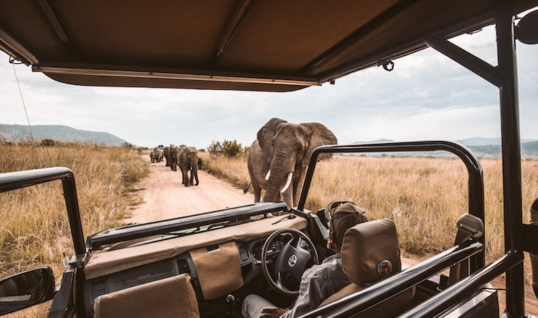 people in a jeep on safari near elephants